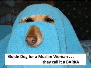 gudie dog for muslim woman
